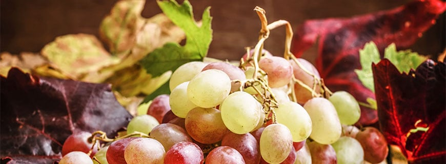Warum aus Trauben Wein wird