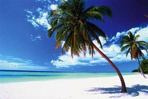 endloser Sandstrand, strahlend blauer Himmel, tuerikisfarbenes Wasser und Palmen der Karibik sind zu sehen