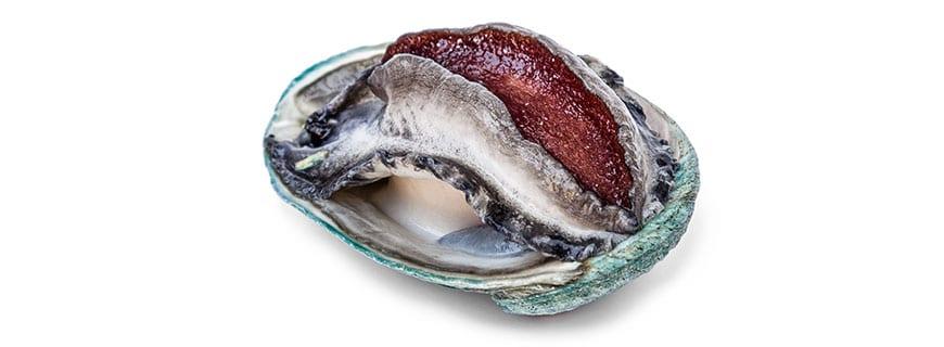 Abalone, die bekannteste Meeresschnecke