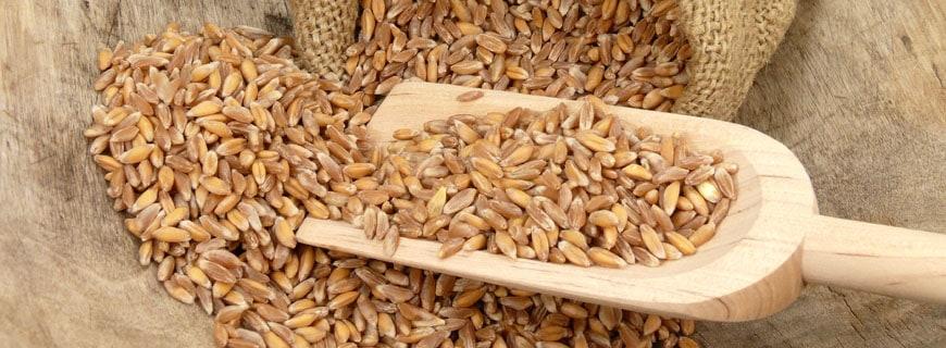 Alte Getreidesorte Emmer