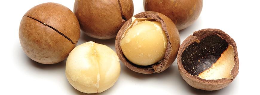 Macadamia-Nüsse