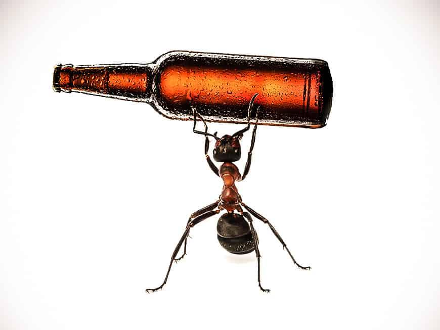 Ameisen sind der neueste Aromentrend im Bier.