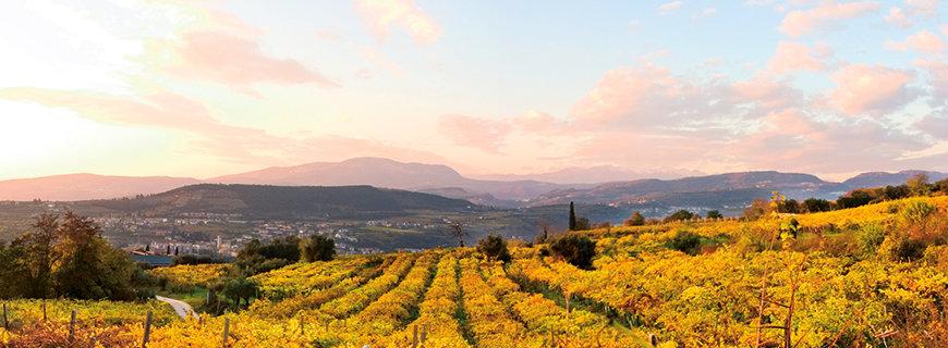 Amo Amarone- italienische Weinberge