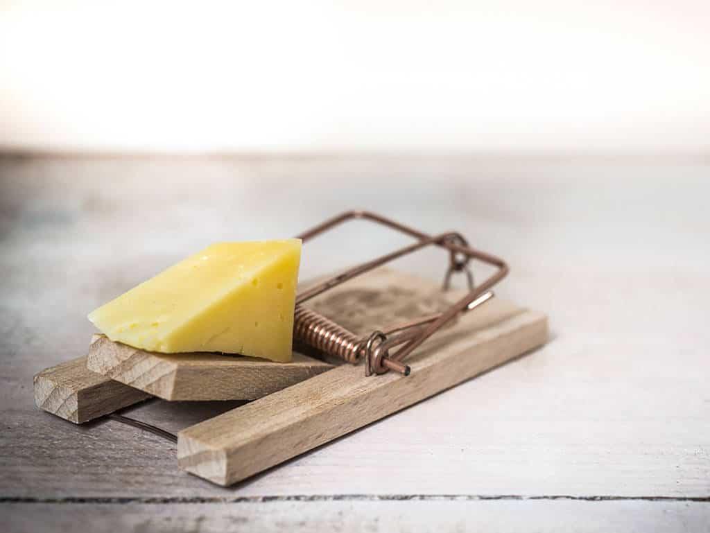 Wer nicht fragt, bleibt dumm, Käse