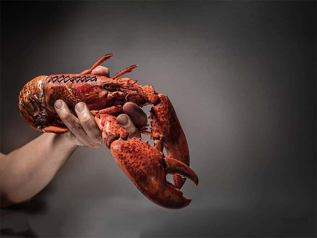 Meerestiere sind beliebte Produkte für Nachmacher: Mit gehäckselten Fischabschnitten und ein bisschen Farbe lassen sich Krebsfleisch oder Hummer herstellen. Auch Lachs wird durch preisgünstigere Produkte und Lebensmittelfarbe gerne imitiert.