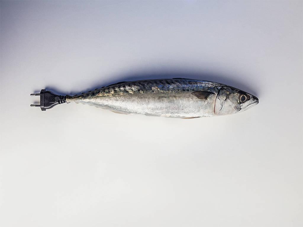 Aquaponik: Fische, die gegen den Strom schwimmen