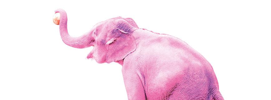 ein rosa Elefant hält einen Ball mit dem Rüssel