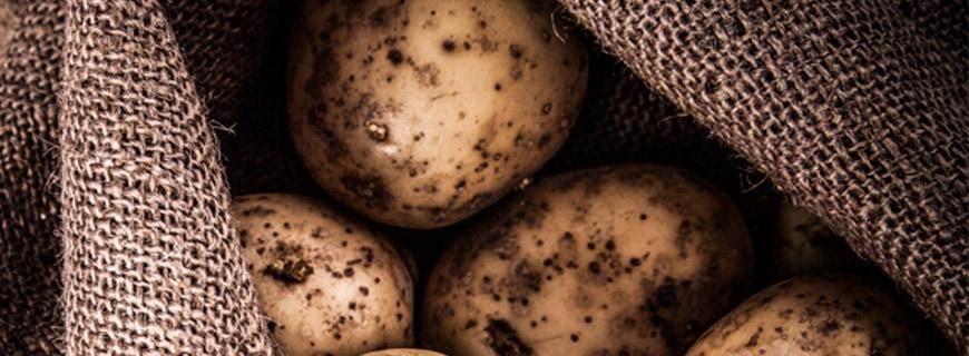 ausggetriebene Kartoffeln