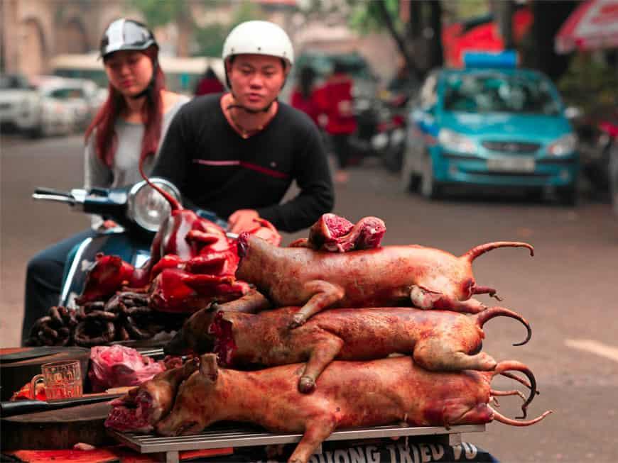 Ahnungslosen Touristen wird auf Bali Hundefleisch verkauft.