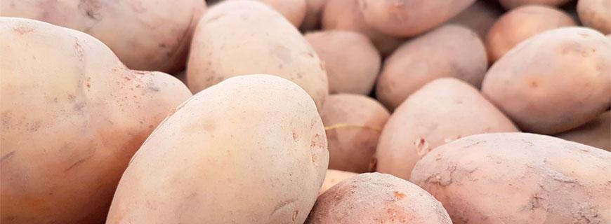 kartoffeln-header