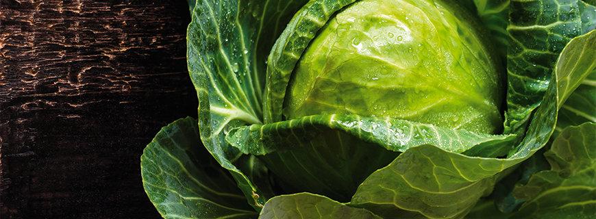Das Trend-Gemüse Kohl