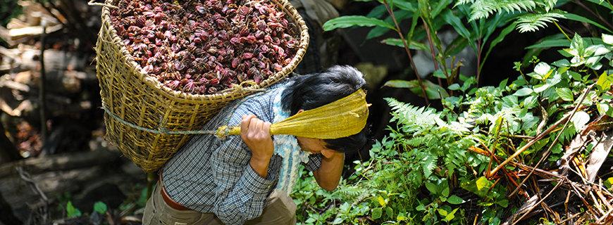 WIBERG in Nepal auf der Suche nach neuen Aromen
