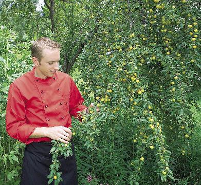 Thomas Dreher pflückt Früchte vom Strauch