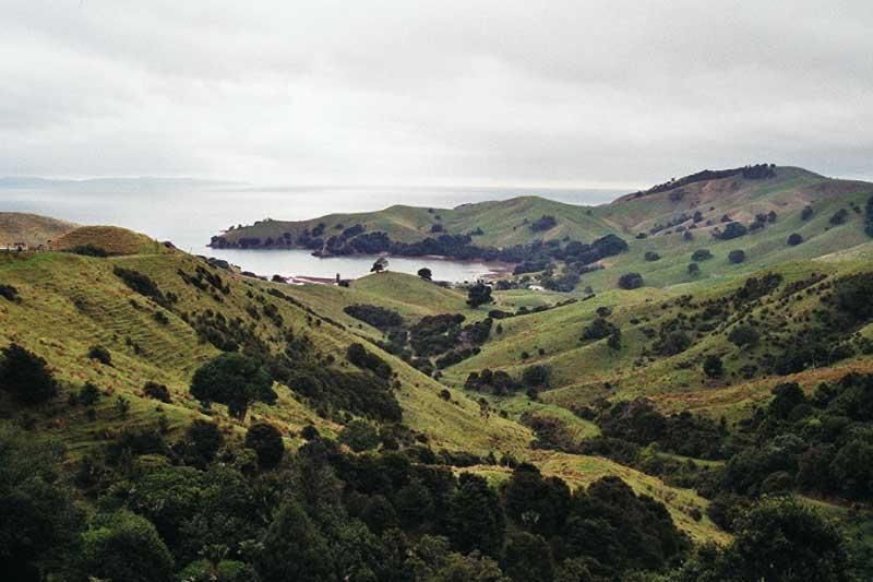 wunderschöne saftig grüne küste in neuseeland