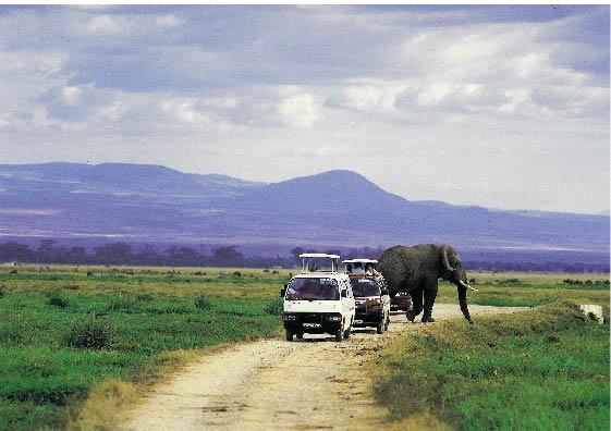 Safari in Südafrika, zwei Autos fahren einen Feldweg entlang während hinter ihnen ein elefant spazieren geht