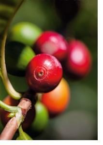 Unterstützung der Kaffeebauern