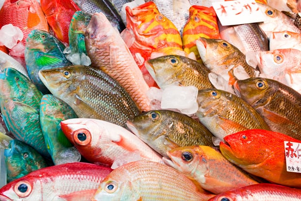 Tokios Fischmarkt Tsukiji