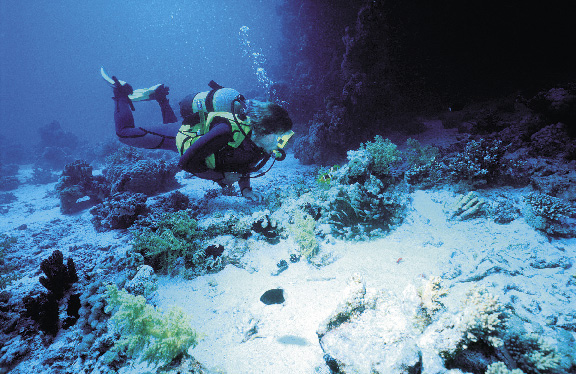 Eine person in taucherausrüstung betrachtet die farbenfrohe unterwasserwelt der cayman islands