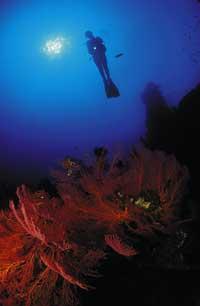 eine Dame beim Schnorcheln und erkundschaften der Unterwasserwelt von Bali