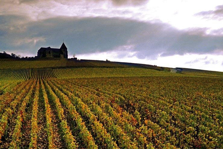ein ewig langer Weingarten und eine kleine Kirche in der französischen Province