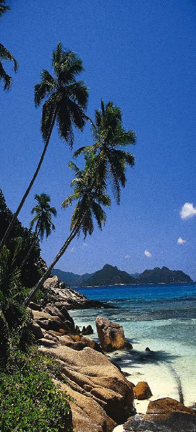 steinige küste, kristallklares wasser und saftig grüne palmen auf den seychellen