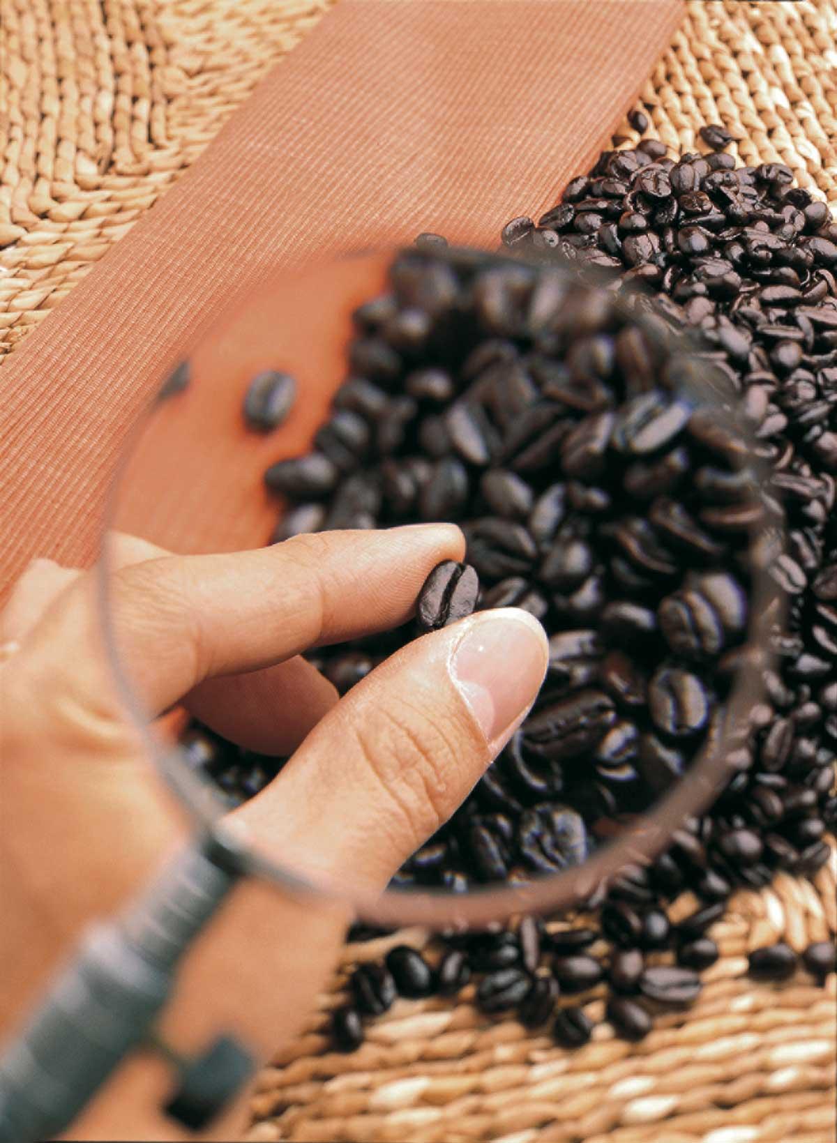 röstfrische kaffeebohnen mal unter die lupe genommen