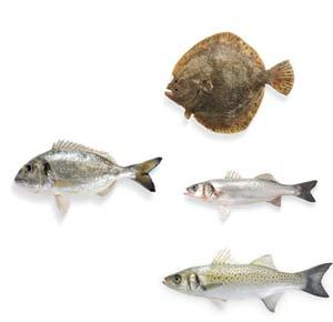 unterschiedliche Fischsorten