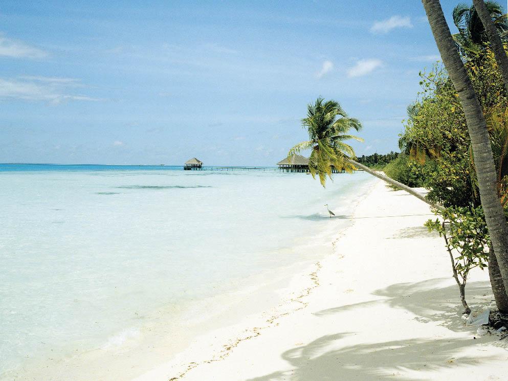 endlos weite, weiße Sandstrände unter Palmen