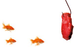 drei Goldfische vor ihnen ein Köder mit einem Stück rohen Fleisch