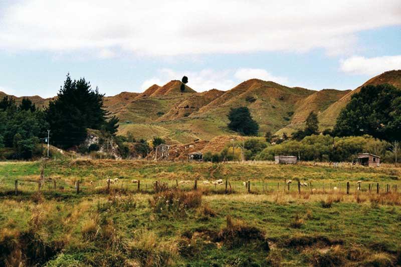 neuseeländische hügellandschaft getaucht in braune und grüne naturtöne