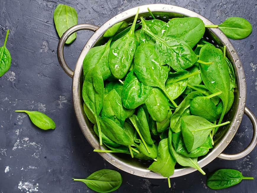 Spinatblätter frisch grün in einem Topf