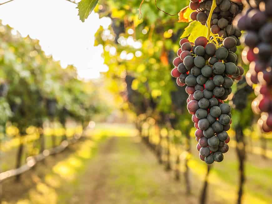 Nacktarsch ist eine Großlage im deutschen Weinbaugebiet Mosel