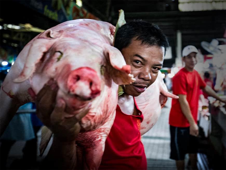 die Filipinos haben im wahrsten Sinn des Wortes Schwein gehabt