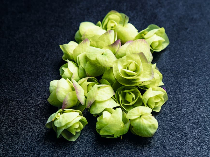 Floregano Blüten
