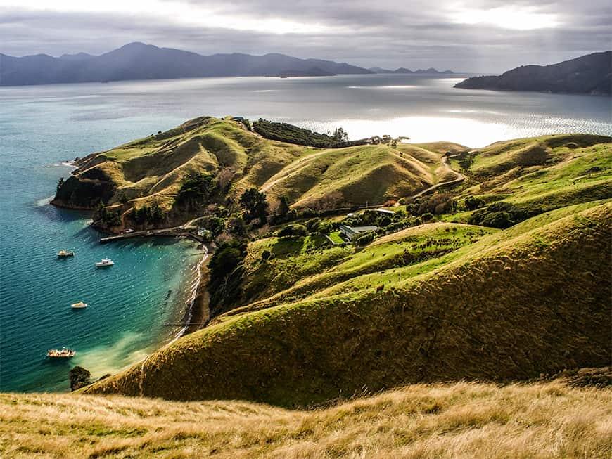 Neuseelands Landschaft: Grüne Hügel am Meer