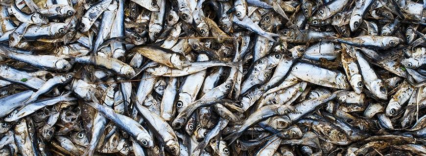 Aquakulturen