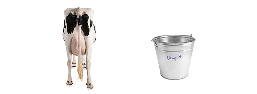 Omega-3-Fettsäuren von einer genetisch veränderten Kuh