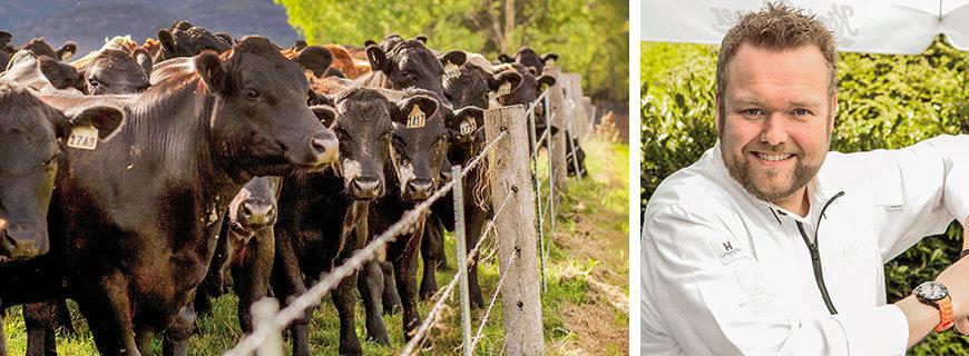 Wagyu-Rinder der Jack's Creek Farm