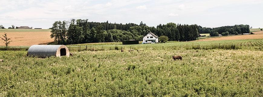 Duroc Schweine Farm