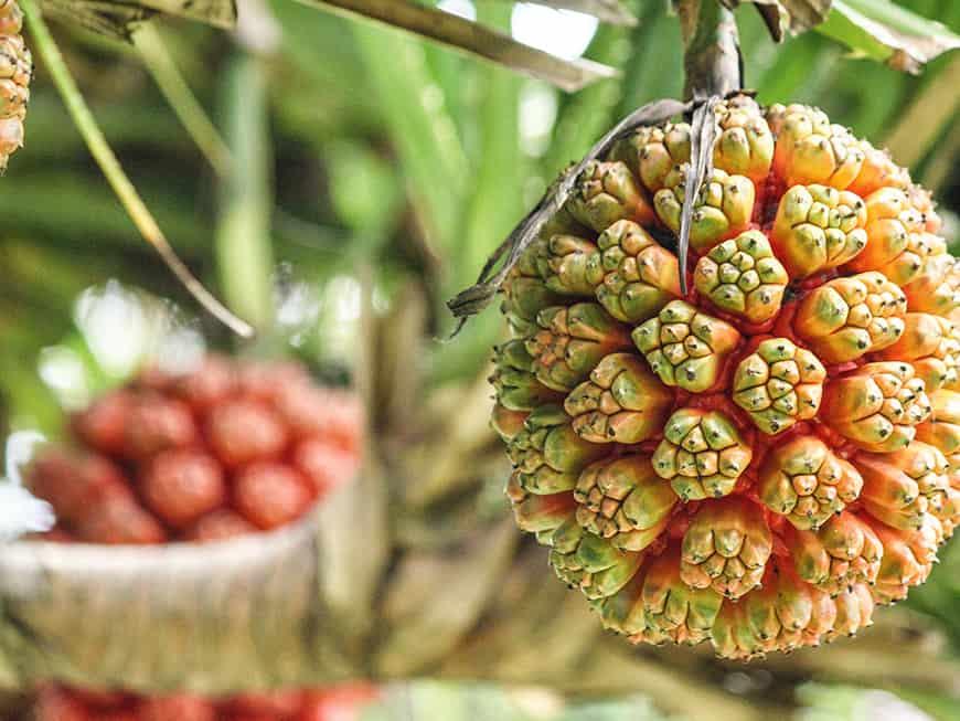 Exotische Früchte, feine Speisen: Kulinarisch arbeiten die Chefs im Paradies auf höchstem Niveau.