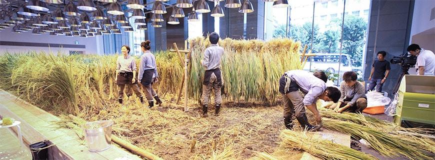 Arbeitsplatz- und Nahrungssicherung: Das Projekt Pasona Urban Farming soll nicht nur gesunde Lebensmittel hervorbringen, sondern auch Arbeitsplätze für die Menschen der Umgebung Tokios. Es ist das Aushängeschild für urbanen Gemüsebau in der asiatischen Metropole.