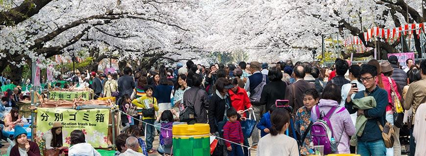 ein Touristenmagnet: die Kirschblüte in Tokio