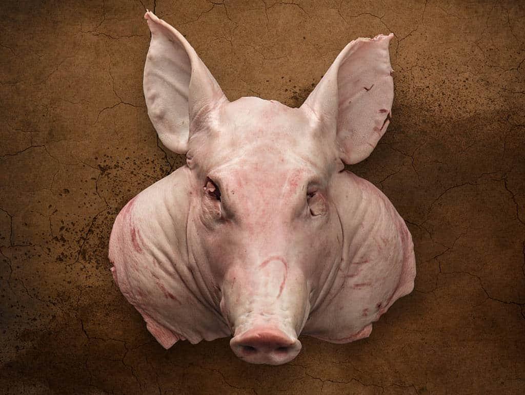 csm_231-schweine-header_194bd3e1c3