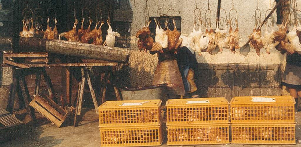 Kröswang hat sich vom Hühnerspezialisten zum Frischelieferanten entwickelt