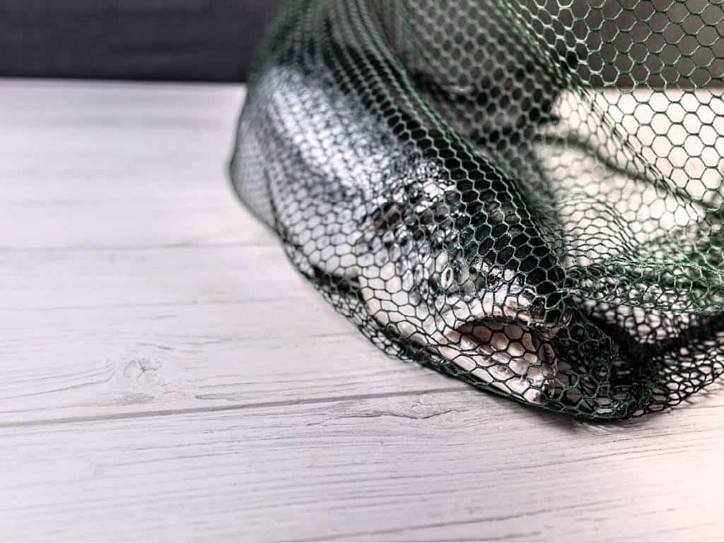 Ein Lachs, gefangen in einem Fischernetz.