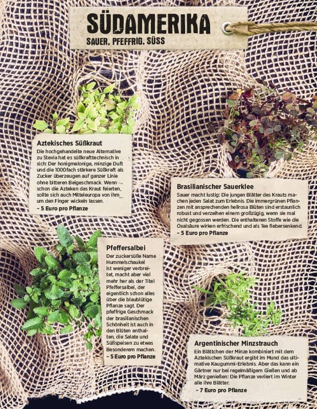 Kräutergarten aus Südamerika