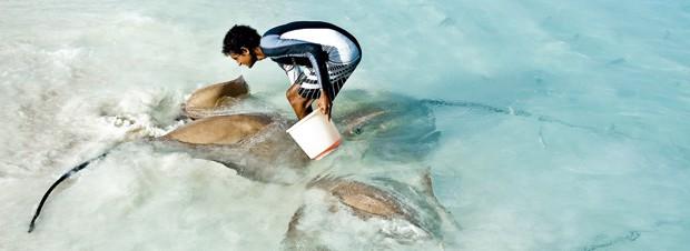 Arbeitsumfeld Malediven - Rochen im Flachwasser
