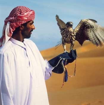 Ein arabischer Herr in einem Kaftan mit einem Falken am Arm