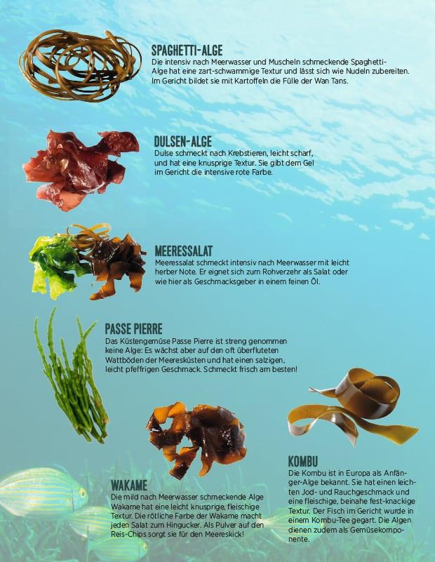 Algenarten unter Wasser