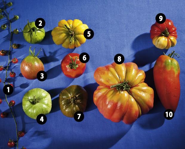 10 Top Tomaten Raritäten